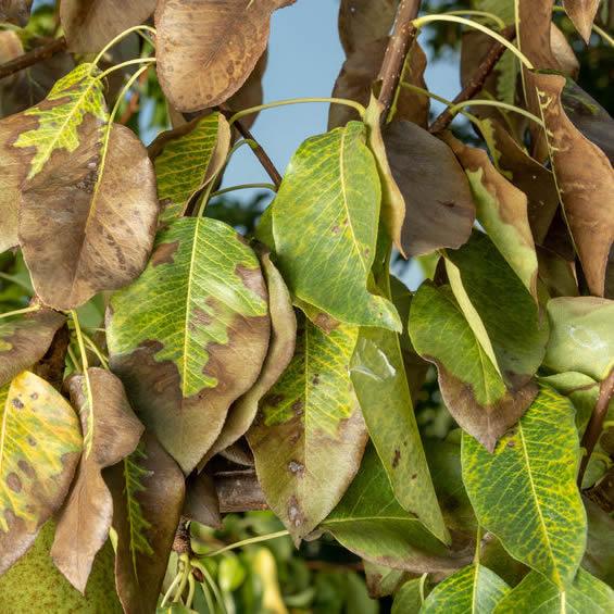 Tree Disease Control